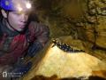 Csapdába esett szalamandra a Pénz-pataki-víznyelőben