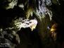 Szirén-barlang 2015